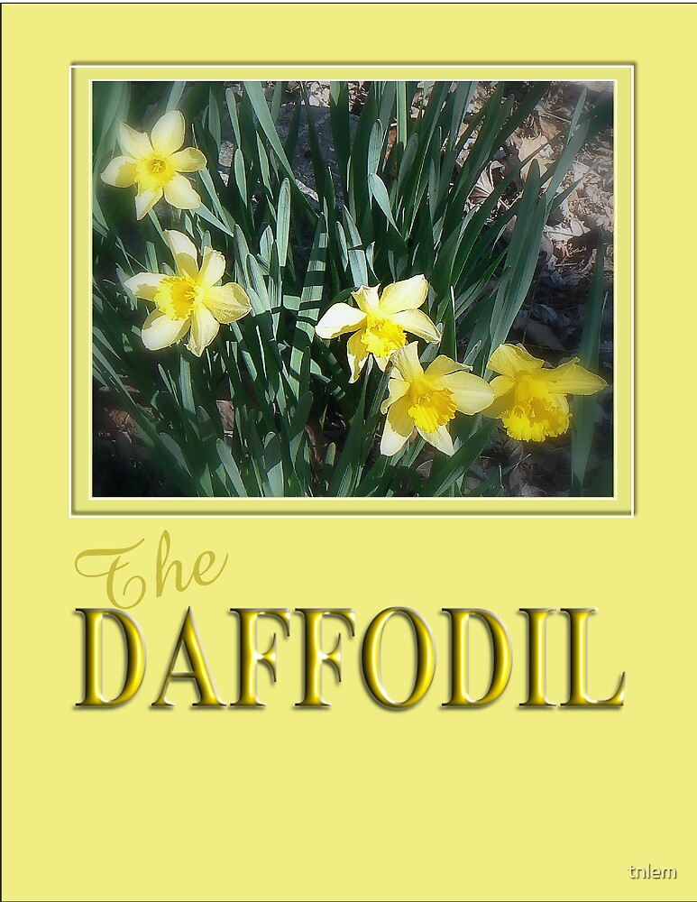 The Daffodil by tnlem
