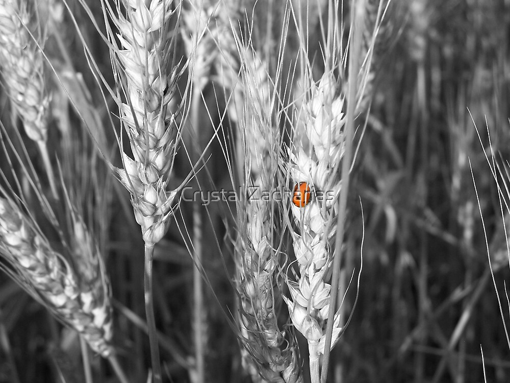 Lady Bug by Crystal Zacharias