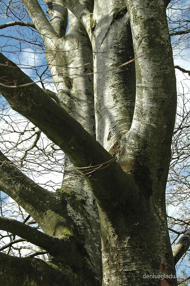 Twin Tree Trunks by denisegladwell