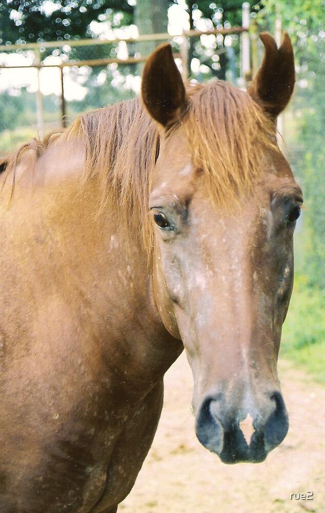 split ear horse by rue2