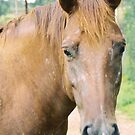 split ear horse by rue2