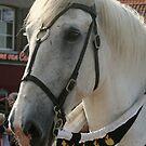 Joust horse by patjila