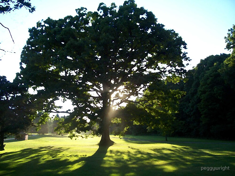 oak tree at the golf course by peggywright