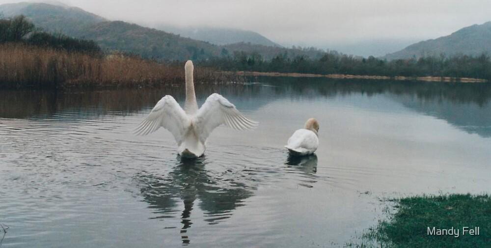 Swan by Mandy Fell