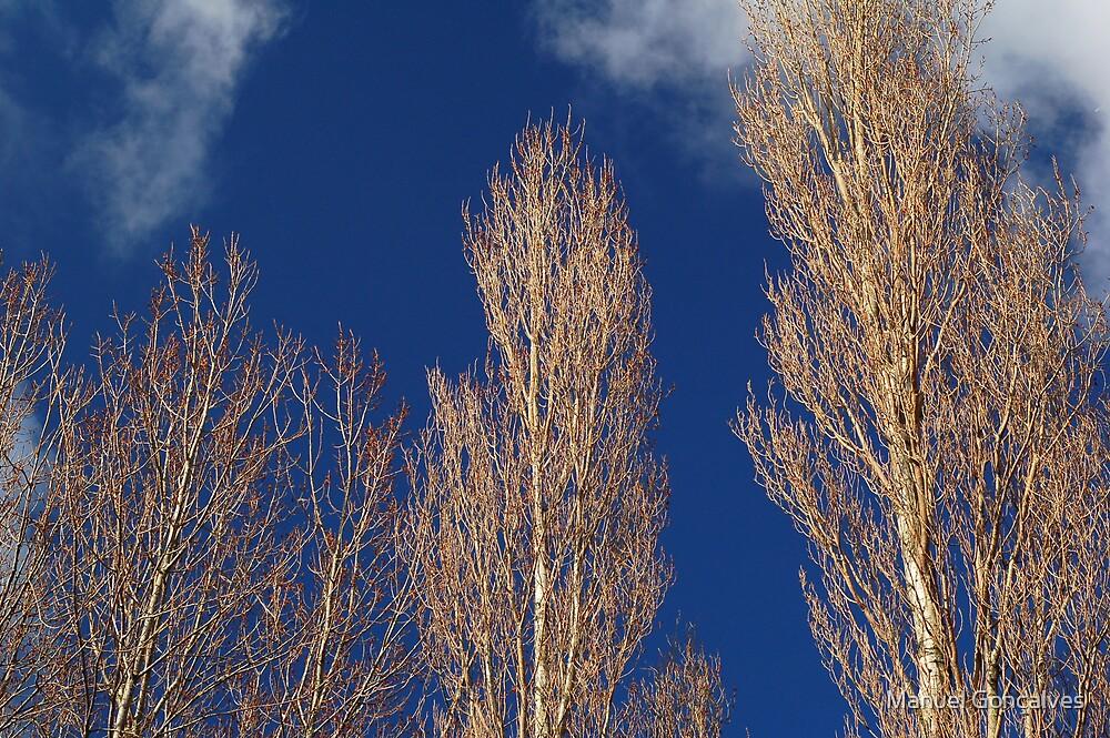 Blue sky by Manuel Gonçalves