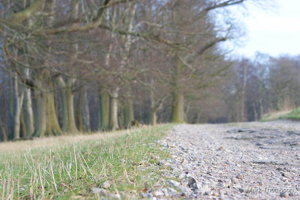Woodland Path by Mark Thompson