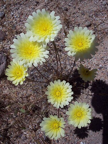 Desert Flowers by andreatreitman