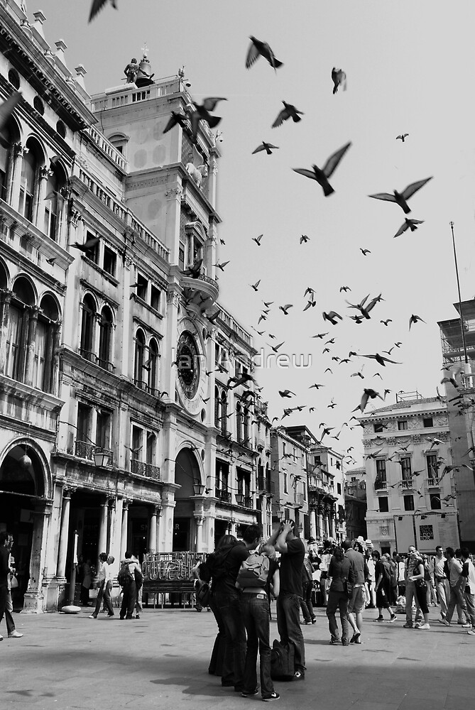 Pigeons in St Marks Square by Ian Andrew