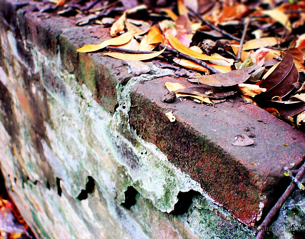 Bricks with Leaves by BMV1