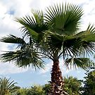 Fronds of Palm by Carolyn Bishop