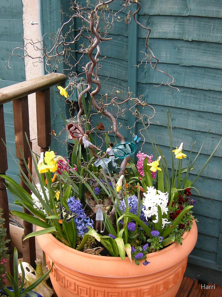 Flower Tub Fairies by Harri