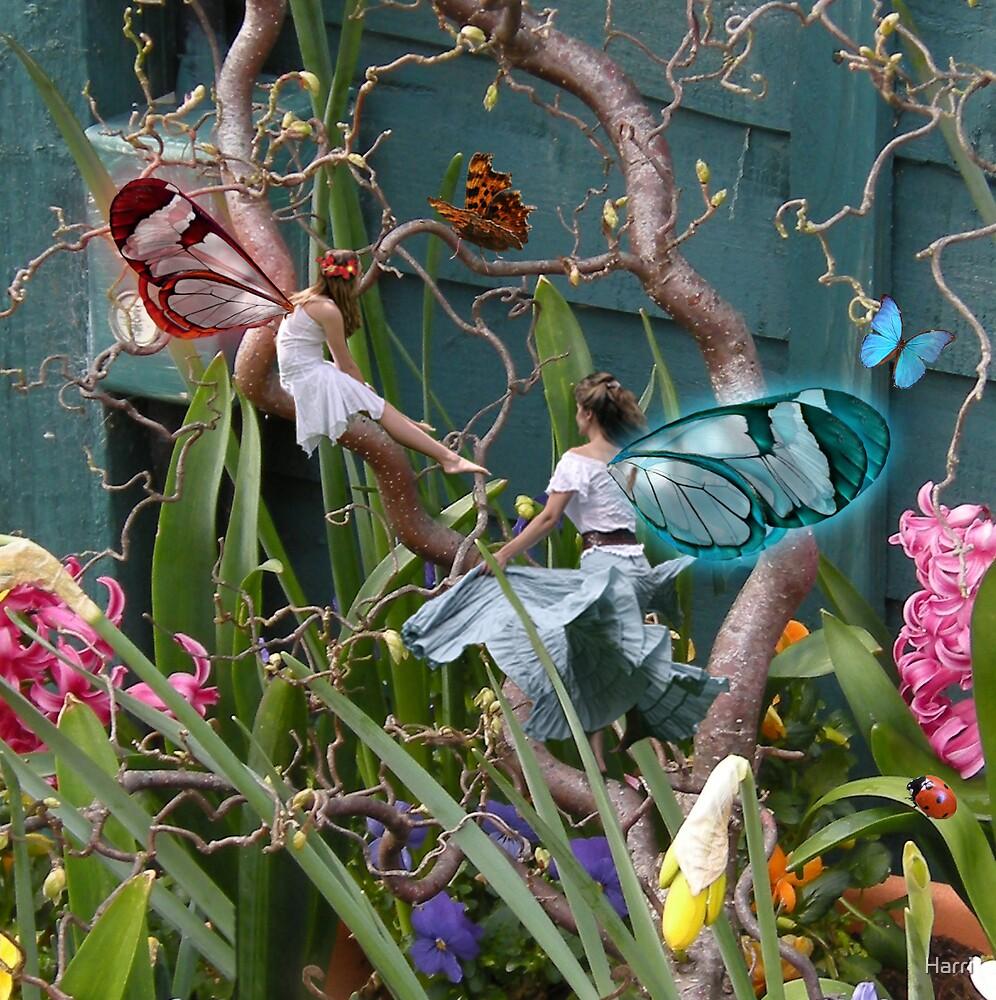 Flower Tub Fairies 3 by Harri