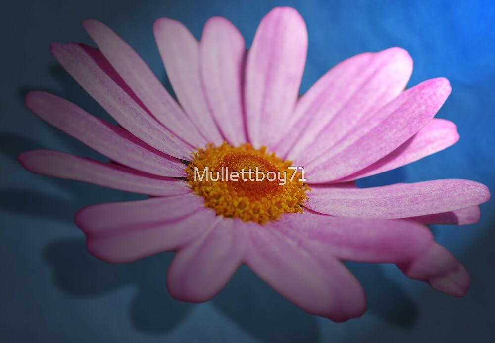 Flower by Mullettboy71