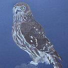 Australian Barking Owl, colour pencil art by Marta Lett