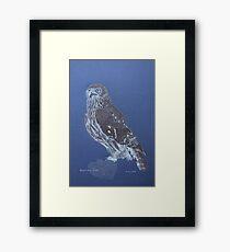 Australian Barking Owl, colour pencil art Framed Print