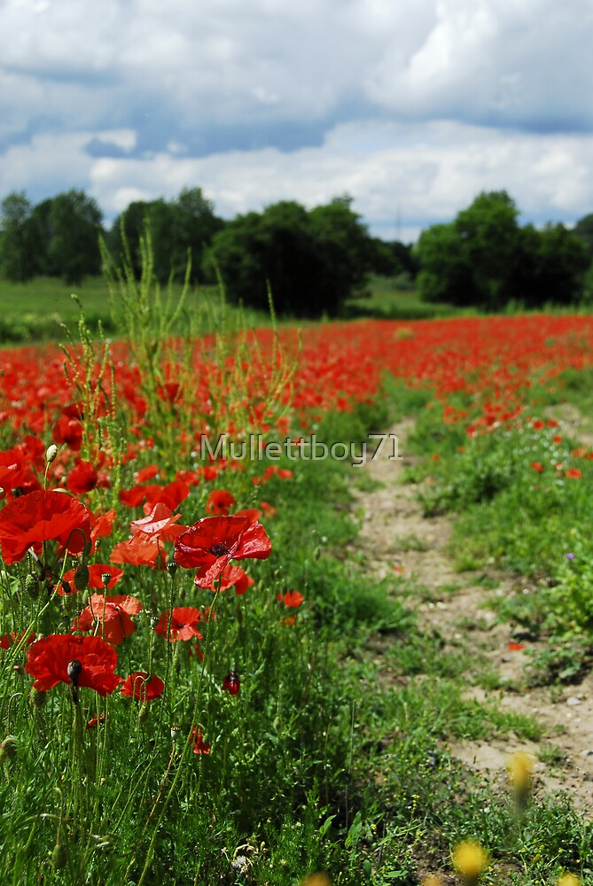 Poppies by Mullettboy71