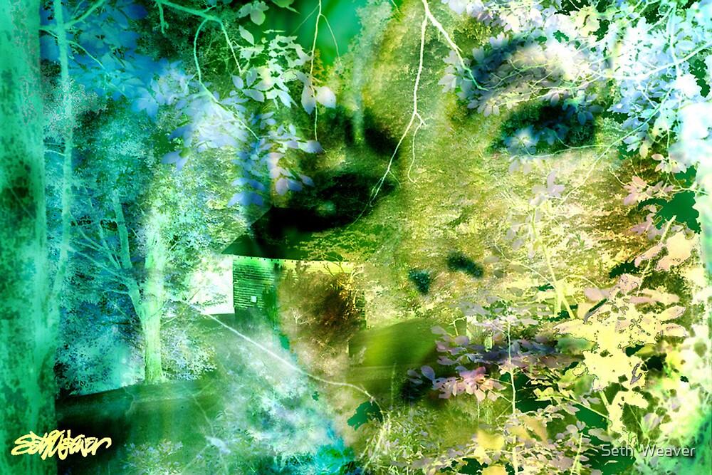 Deep Woods Wanderings by Seth  Weaver