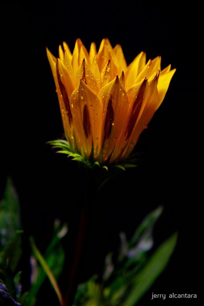 Golden Yellow by jerry  alcantara