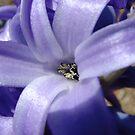 pollen by photolvr761