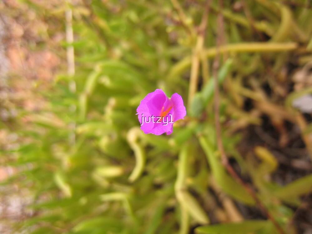 Desert Flower by jutzy1