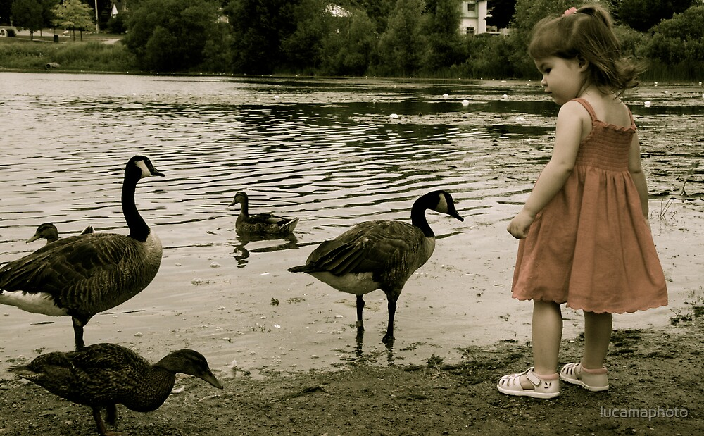 duck, duck, goose! by lucamaphoto