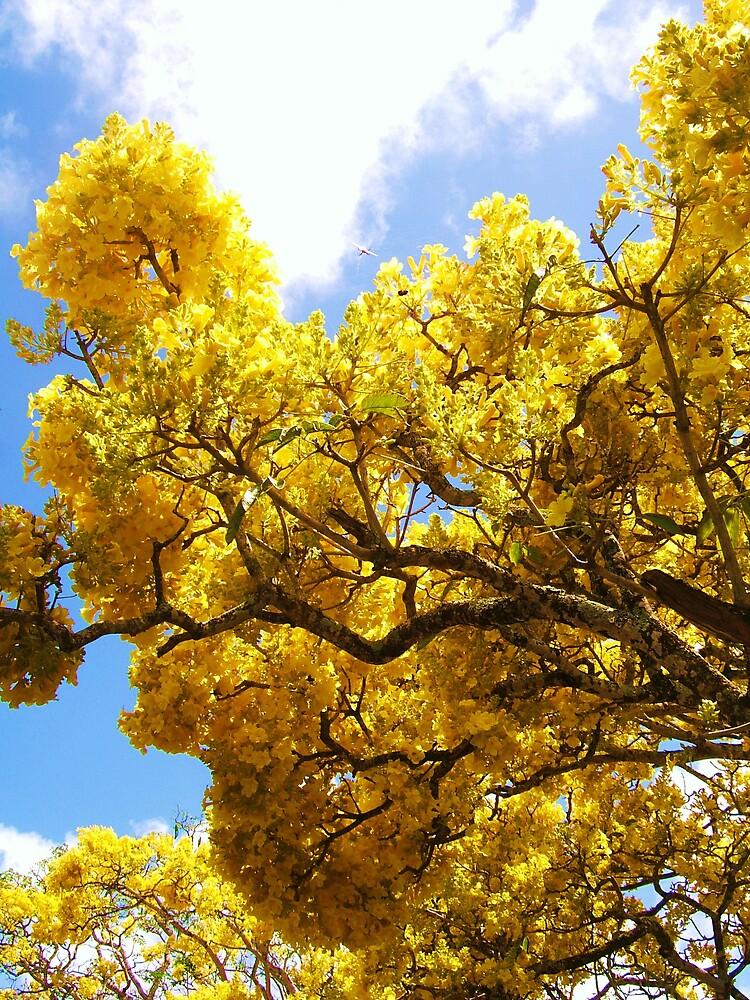 Yellow tree by Diana Forgione