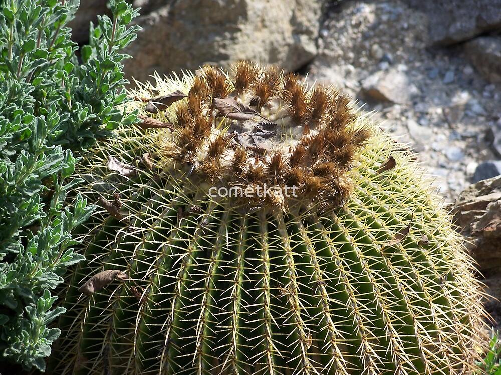 golden barrel cactus by cometkatt