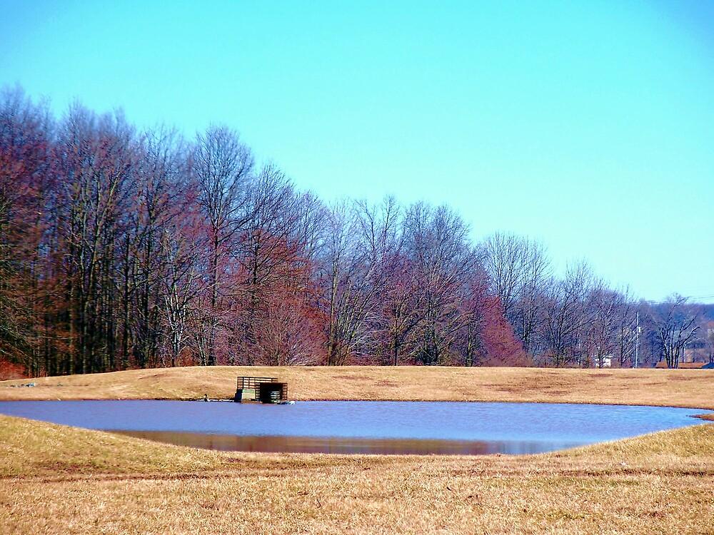 Peaceful pond by Judi Taylor