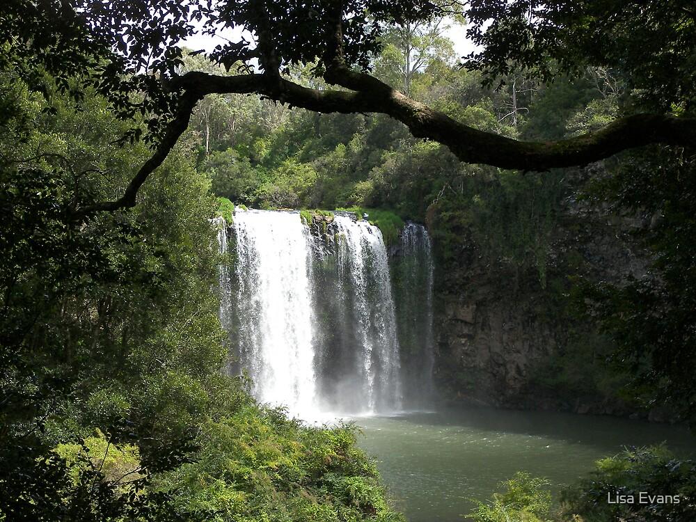 Dangar Falls, Northern Tablelands, New South Wales by Lisa Evans