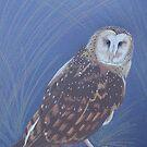 Australian Grass Owl, colour pencil art by Marta Lett