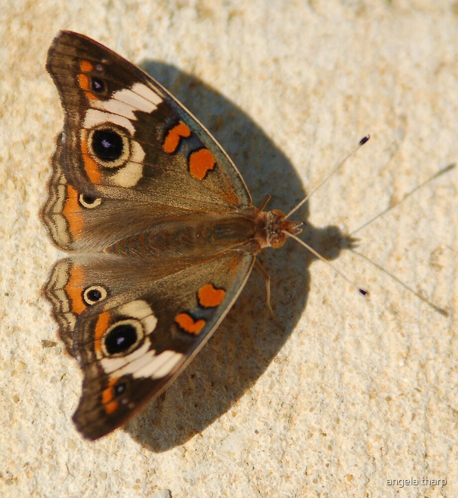 Butterfly Shadow by angela tharp