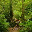 Magic Rainforest by Michael Matthews