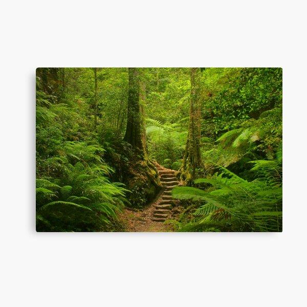 Magic Rainforest Canvas Print