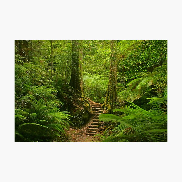 Magic Rainforest Photographic Print