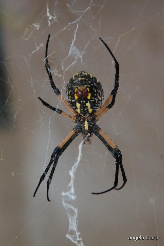 Itsy Bitsy Spider by angela tharp