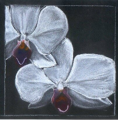 White orchids by ValM