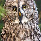 Great Grey Owl by Dominika Aniola