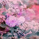 Romantic Rose Soft Pastel Colors by artsandsoul