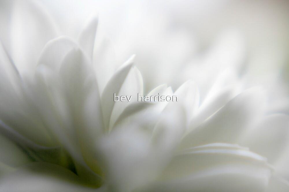 dreaming by bev  harrison