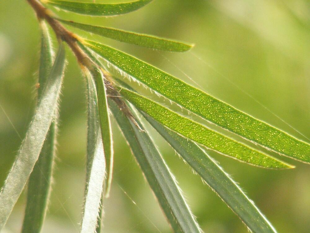 Green Leaves. by jbrinx27