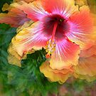 Hibiscus by jules572