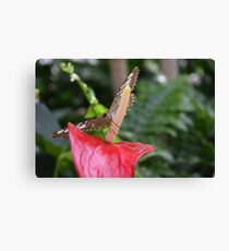 flower with a butterfly Canvas Print