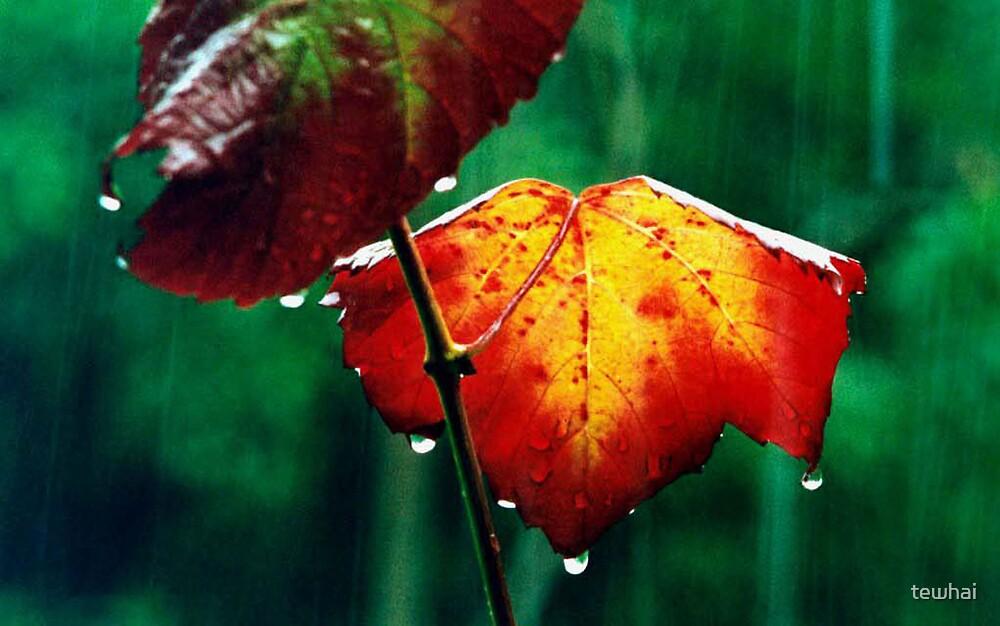 Keep on Raining by tewhai