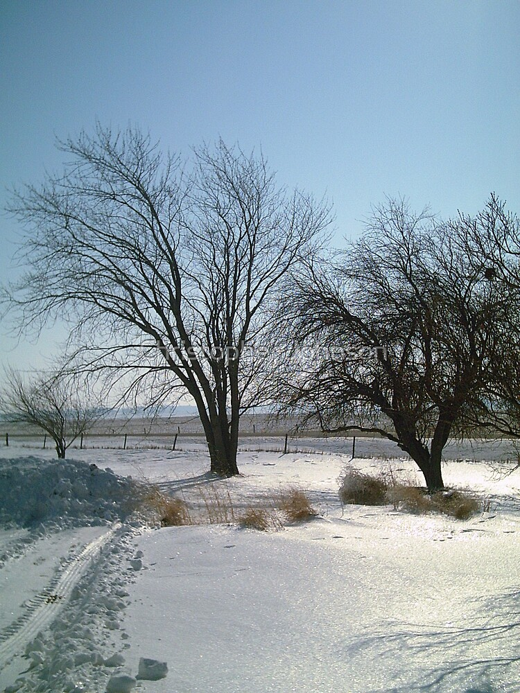 Old Trees by the Road at the Farm in Iowa - Feb 2008 - View 2 by Christopher Johnson