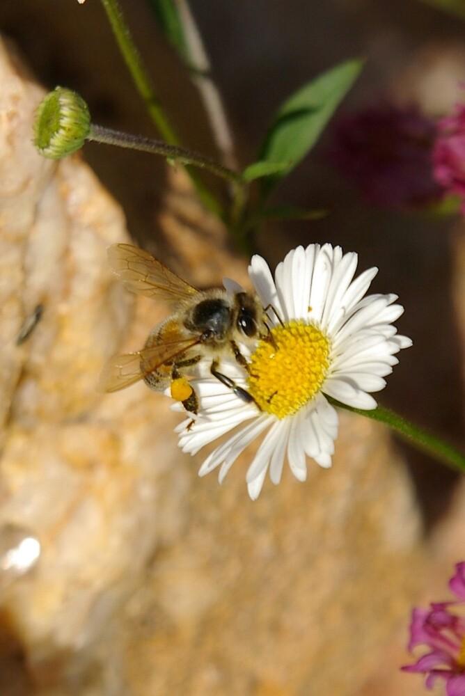 Like a bee to a flower by Deidre Cripwell