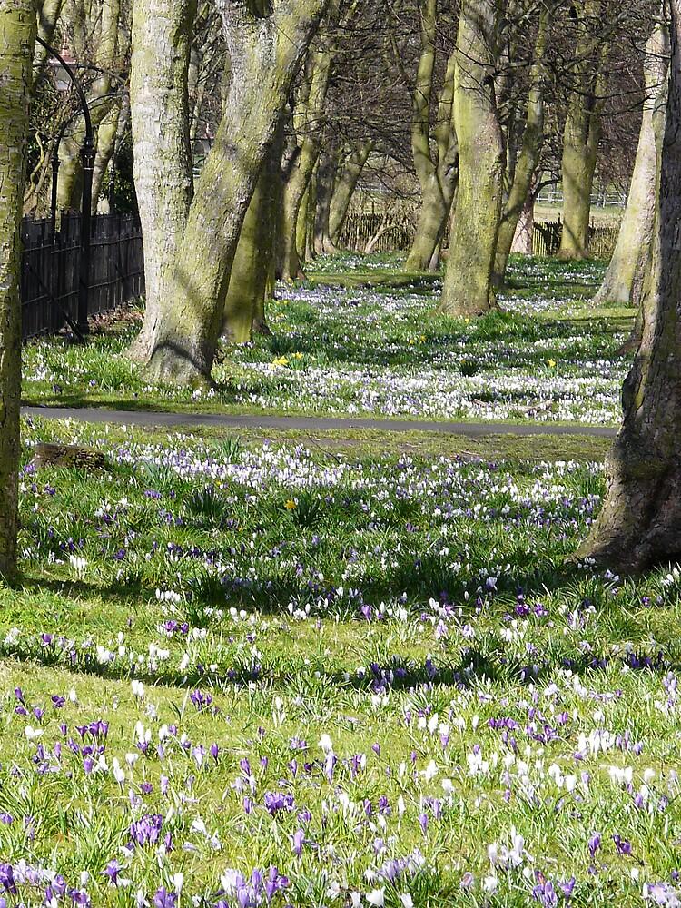 Nunsmoor Park in Spring by mcbirdie