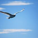 Free as a Bird by Natalie Cooper