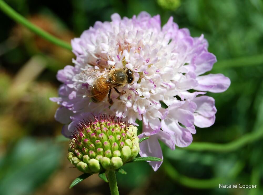 Worker Bee by Natalie Cooper