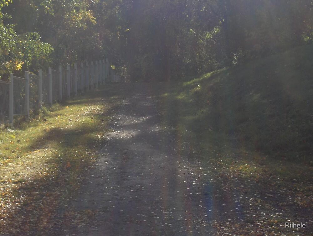 Hidden Path by Riihele