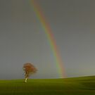 Tree and Rainbow by George Crawford